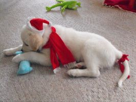 Christmas puppy by Emzoid