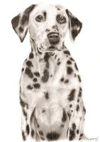 Dalmatian by xx-ashley