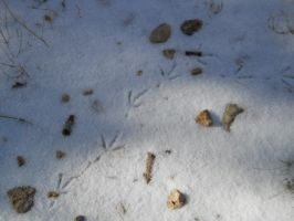 Bird Tracks by Chris01125