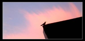 birdy on the roof by terpsichorean