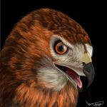 Odin the Red-Tailed Hawk by Dragonflm61