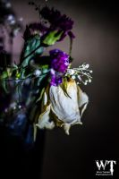 Dead Flower Study 3/5 by Wild-Theory
