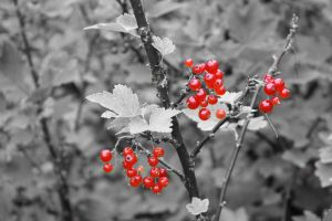 Berries by Manisma