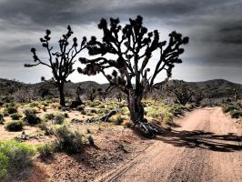 Joshua Trees and Their Shadows by ClymberPaddler