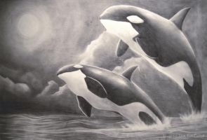 the Orcas by PosiTori