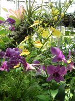 Yellow and Purple Orchids by dmguthery