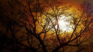 Sun And Tree by piperpiper7