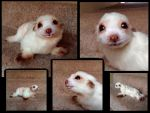 Posable baby fur seal Art doll by HoneyCricket