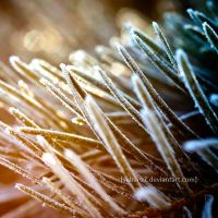 winter spikes by Subaru7