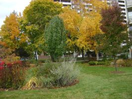 Canadian Fall Colours 1 by Aswang301