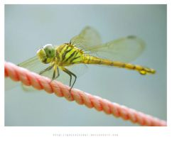 smiling dragonfly... by polisitidur