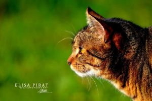Meow ! by Wild-LifePhotography