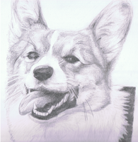 Corgi by ConkerTSquirrel