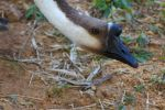 Goose Looking by nathanpc