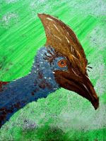 Strong, Independent, Cassowary. by Saturdaythe13th