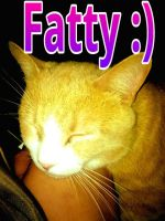 My Cat Fatty by MissWickedCreationz
