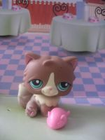 Rare Lps cat by Twilightberry