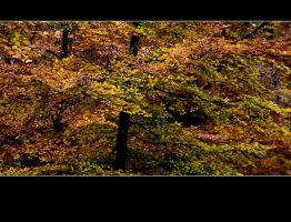 Autumn 2009 ... too ... by Rob1962