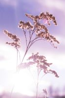 In A Dream by phograph