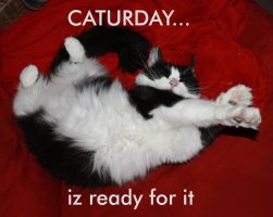 Caturday by LeeAnneKortus