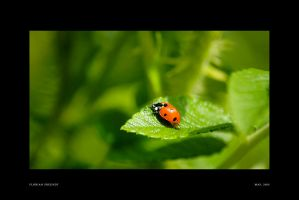 little red dot by hermik