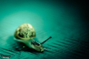 Lil Snail by M4ND4R