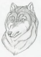 Wolf Black and white by DrMario64