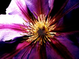 Spiders Flower High Contrast by AquarianPhotography