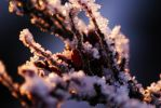 berry ice by Laurenwyllie