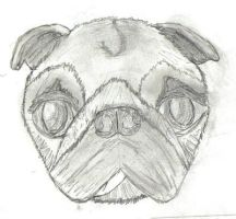pugsketch II by check-out