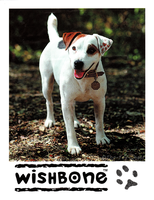 Wishbone Paw-O-Graphed Mini Poster by The-Toy-Chest
