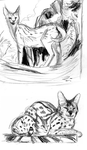 Coupla servals and one tabby by Teavian