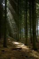 Band of Brothers Woods by arkady001