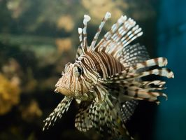Fish by Humie