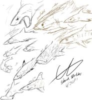 Shark Sketches by GingaAkam
