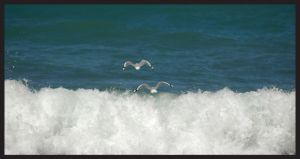 Gulls 'n' Waves by CrazeeAce