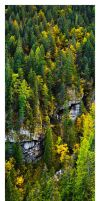 Autumn Forest - Panorama by AndreasResch