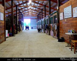 Stable Stock - 5 by ElaineSeleneStock