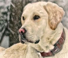 Yellow Labrador Retriever by ShawnaMac