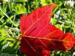 Bright red Autumn by EleanorNaomi