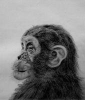 Baby chimp by Cosmic-Cherry-Tree