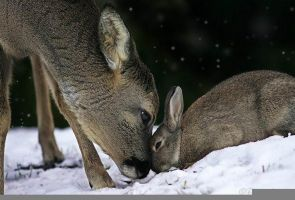 The real Bambi and Tumper by Ayumi789