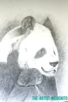 The Panda Portrait by The-Artist-Incognito