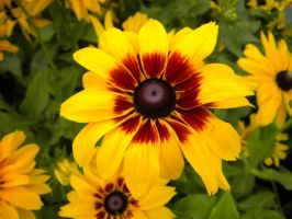 Yellow and Brown Flower by Stock-By-Crystal
