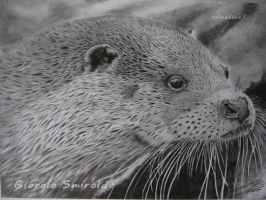 Pencil River otter - lontra by selvatico3