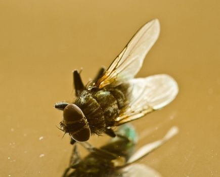 A fly...up close by Egg-Salad