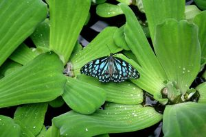 Butterfly Resting by Miss-Reptilian