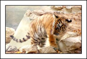 Baby Siberian Tiger by Ch4s7i7y