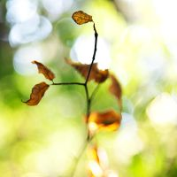 dancing leaves by jfphotography