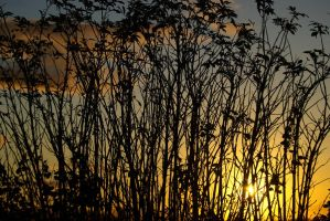 autumn sunset--3 by cheah77